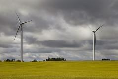 Turbines (Jack Landau) Tags: turbines windmill farm ontario rural woodstock outdoor landscape field serene sky plain