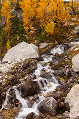 Fall Larches in Bugaboos (Don Geyer) Tags: goldenlarchesaboveacascadingcreekinfall bugabooprovincialpark britishcolumbia canada bc creek creeks forest larch larixspecies larches forests habitat environment naturalenvironment habitats environments naturalenvironments landscape landscapes natural outdoor outside outdoors river rivers rock rocks scenic scenery scenics wild uncultivated wilderness backcountry wilds ecology ecosystem ecosystems nature diffused soft autumn fall falls autumns morning mornings brook water brooks stream streams cloudy cloud clouds
