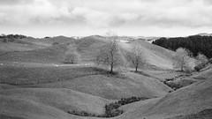 The Shire (Stephen A. Wolfe) Tags: swolfe2000 35mm adobelightroom agfa agfaapx400 blackandwhite canoscanfs2710 film hobbiton hobbitonmovieset httpstephenwolfephotography kodakhc110 leicam2 newzealand thehobbit vacation zeisssonnar50mmf15zm analogphotography filmphotography landscape