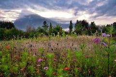 Quand vient la fin de l't (Excalibur67) Tags: nikon d750 sigma 24105f4dgoshsma paysage landscape mountain montagne alpes fleurs flowers nature nuages cloud