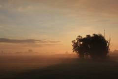 Risvegli (lukanski) Tags: sonno ferrara bassa pianura central delightful best flickr explore explorer delicato sogno dreaming nature luca alba nebbia fog mist sunrise canon 1740f40l 600d
