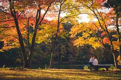 Lake Elise (gabe.mirasol) Tags: nikon d600 50mm 18 18g f18 prime landscape autumn fall colors contrast water lake nature outdoors