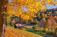 BARN ON SLEEPY HOLLOW FARM (jlucierphoto) Tags: barn pomfret woodstock foliage autumn fall vermont tree yellow colors maple outdoor field farm serene newengland
