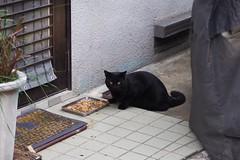 Today's Cat@2016-10-09 (masatsu) Tags: cat thebiggestgroupwithonlycats catspotting pentax mx1