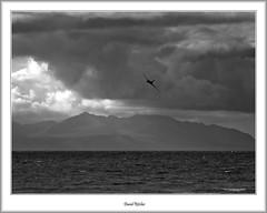 Avro Vulcan ZH558/G-VLCN (flatfoot471) Tags: 2014 aircraft airshow avro ayr ayrshire blackwhite military royalairforce scotland summer unitedkingdom vulcan warbird