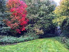 Autumn Walk (Marc Sayce) Tags: acer maple autumn walk hampshire hartley mauditt south downs national park hangers way 2016