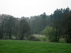 2013 Germany // Hunsrückhöhenweg // (maerzbecher-Deutschland zu Fuss) Tags: trekking germany deutschland hiking natur trail wandern fuss zu rheinlandpfalz wanderweg fus hunsrück wanderwege 2013 fernwanderweg weitwanderweg maerzbecher hunsrückhöhenweg deutschlandzufus deutschlandzufuss