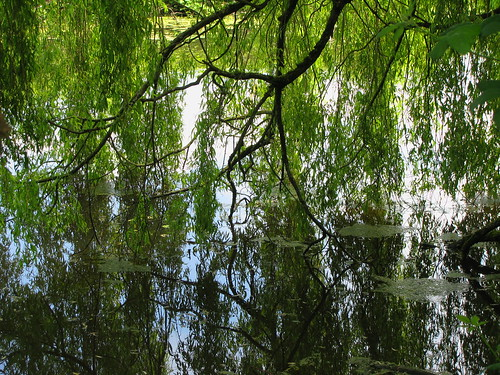 Underneath The Willow