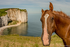 Bonjour  les amis . (musette thierry) Tags: cheval paysage musette thierry d600 nikon horse