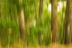 brushstrokes in the woods (bresciano.carla) Tags: blur pentaxk500 helios442258 pentaxart naturalmente