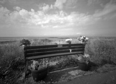Big Red takes the road to Dalgarven (wheehamx) Tags: big red wide angle homemade camera plastic lens