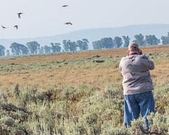 SAGE-GROUSE, Greater (teddcenter) Tags: antelopeflats billboeringer bird grandtetonnationalpark greatersagegrouse grouse people tetoncounty wyoming