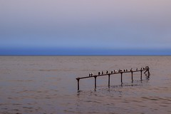 Punta Arenas (Medigore) Tags: punta arenas muelle medigore azul mar sea extremo aire libre paisaje costa orilla del agua ocano pajaros canont3i