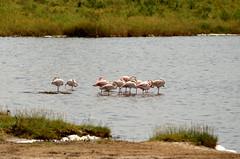 PWS_6822 (paulshaffner) Tags: dorobo safaris dorobosafaris serengeti safari studyabroad education abroad tanzania penn state pennstate biology pennstatebiology