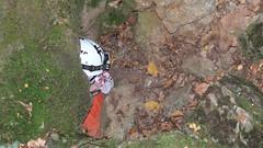 mamut-chokrak_cave_07 (ProSpeleo) Tags: cave mamutchokrak crimea bajdarsky valley russia kizilovoe karst