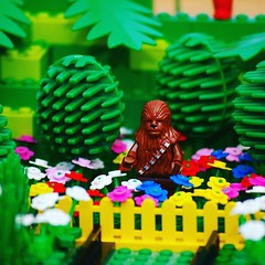 Another of my old photos. Chewie in the garden. #lego #starwars #chewie #afol #bricknetwork #photos #photography #camera #legophoto #toyphoto #minifig #minifigures #photo #toy #brickphoto #brick #piece #micro #minifigure #bricktease #legos (Bricktease) Tags: instagram lego afol toy photo photos photography star wars marvel lotr upload bricktease movie poster film