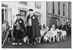 Autrefois le Couserans 2016 (PierreG_09) Tags: arige pyrnes pirineos couserans autrefoislecouserans fte tradition dfil portrait nb bw noiretblanc monochrome conversion berger brebis troupeau