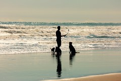 Reflecting on Man and His best friend (Psychic Insights) Tags: dogs waves people spring sea oceans blue sky nature outdoors free reflections shilloutes