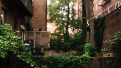 2920 Backyards (JoelZimmer) Tags: 16x9 35mmf2d bokeh brooklyn newyork nikond750 parkslope