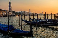 Venice and its gondolas at dawn with Campanile on left - Venice, Italy (Phil Marion (55 million views - thanks)) Tags: public italian phil marion 5photosaday beauty beautiful travel vacation candid beach woman girl boy wedding people explore  schlampe      desnudo  nackt nu teen     nudo   kha thn   malibog    hijab nijab burqa telanjang  canon  tranny  explored nude naked sexy  saloupe  chubby young nubile slim plump sex nipples ass hot xxx boobs dick dink