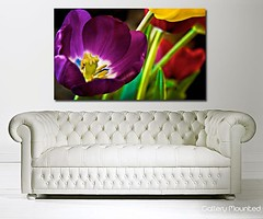PURPLE TULIP IN BLOOM (Canvas Art Shop) Tags: flowers art floral wallart posters prints homedecor flowerart floralprints canvasart canvasprints flowerprints flowerwallart flowercanvasprints flowercanvasart