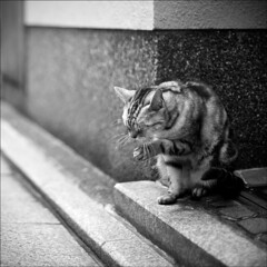 Cat cleaning his paw, Kyoto (Nada*) Tags: life street blackandwhite bw pet cute animal japan cat silver asian japanese mono paw bath kitten kyoto feline asia candid stripes kitty cleaning whiskers gato neko katze paws licking animalplanet stripy cc100