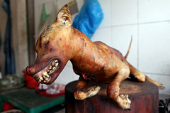eating dog meat, Hanoi, Vietnam, south east Asia (Igor Bilic) Tags: dog men chicken animal restaurant market spit meat roast fortune vietnam pork butcher torch rights luck torture hanoi dogmeat beating roasted haiphong libido nhattanstreet tyhdistrict