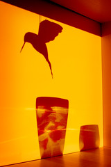 Vers 6h chaque matin (Calinore) Tags: morning light shadow fish bird silhouette soleil ombre lumiere vase poisson oiseau matin lacollection