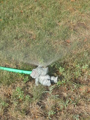 An elephant taking a shower (creed_400) Tags: summer elephant west water grass belmont michigan july hose sprinkler