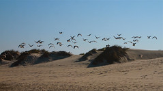 beach in the morning (* Patrícia *) Tags: blue sky praia beach portugal sand areia seagull dune duna gaivota aveiro costanova