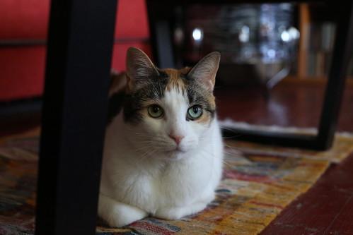 Zelda the cat on Caturday