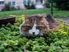 Katze im Beet 16.07.2012