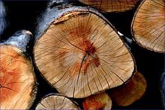 stack of wood 2 (Dan SIP.08) Tags: wood green wooden log logs transilvania roumanie hateg roumania stackofwood tarahategului silvasudesus