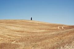 Uno (lubats) Tags: italy canon landscape italia waves country campagna tuscany siena toscana valdorcia paesaggi autofocus campi fieno cipresso sanquiricodorcia sanquirico flickraward canoniani canonisti canoneos1000d