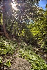 Downstream from Tew's Falls, Hamilton Ontario (Mustang Joe) Tags: ontario waterfall hamilton falls panasonic sns hdr dmc lx7 tews panasoniclumixdmclx7