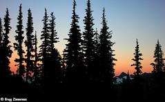 (Gregg Zimmerman) Tags: trees sunset sky mountains tree silhouette sunrise washington mt hills mount rainier mountrainiernationalpark cascades wa img0310 canont2i