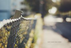 Day 230/365: Happy Bokeh Fence Friday (jennydasdesign) Tags: fence 50mm dof bokeh grain sunny chainlink 365 2012 project365 365days sonydslra300 dt50mmf18sam