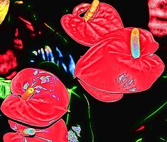 candles (italianoadoravel .BACK ,,,,,,,,,,,,) Tags: fab people sunrise landscape colorful vivid doorway stunning picturesque soe blueribbon onblue smörgåsbord cubism fpc blueribbonwinner singintheblues supershot 5photosaday flickrsbest passionphotography fineartphotos mywinner bigfave abigfave platinumphoto anawesomeshot impressedbeauty aplusphoto superbmasterpiece travelerphotos diamondclassphotographer flickrdiamond ysplix excellentphotographerawards superlativas theunforgettablepictures onlythebestare thatsclassy adoublefave overtheexcellence colourartaward wonderfulworldmix picturefantastic betterthangood theperfectphotographer coloursplosion goldstaraward anticando thebestofday gününeniyisi clevercreativecaptures landscapesdreams unlimitedphotos worldtrekker ourmasterpieces rubyphotographer salveanatureza bestoneframeshortnominee overtheshot llovemypics flickrlovers peachofashot arstisticexpression