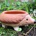 Hedgehog planter, ceramic. Artist: Sara Lynch, Potsdam NY. www.facebook.com/Potsdamelf
