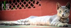 OUTDOOR CAT 4 (. . : : e L m - P h o t o g r a p h e r : : . .) Tags: california light portrait usa dog abstract cat nikon san chat neon sandiego diego 66 route morocco maroc casablanca cym abstracts rabat chaton xeno abstrait assabah d3100