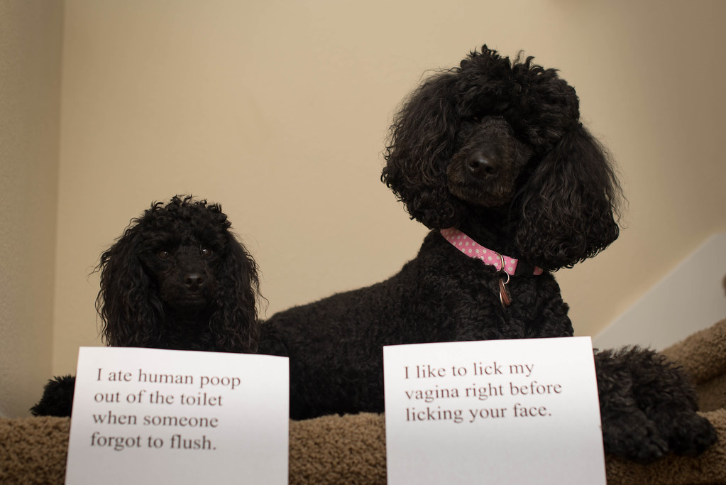 My entry for dog-shaming.com by morgamic, on Flickr