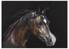 Velvet  - Arab Horse by Jaqueline McAteer (James_McAteer) Tags: painting pastel fineart velvet arab arabian fineartprints jacquelinemcateer jackiemcateer