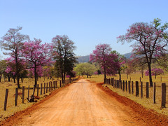Taking a Little Detour (osvaldoeaf) Tags: road santa trip pink flowers trees red brazil sky mountains green nature grass brasil rural fence landscape spring purple farm country sunny dirt goinia gois brbara