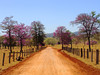 Taking a Little Detour (osvaldoeaf) Tags: road santa trip pink flowers trees red brazil sky mountains green nature grass brasil rural fence landscape spring purple farm country sunny dirt goiânia goiás bárbara
