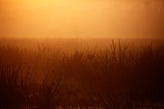24 hours at Bamurru - sunrise (preview_rob) Tags: sunset bird flood nt aerial lodge helicopter retreat plains plain luxe luu bamurru
