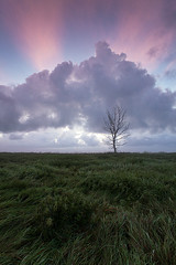 Ordered light (Andrei Reinol) Tags: morning blue trees light sky plants cloud sun tree green nature colors field grass vertical clouds sunrise landscape outdoors photography early colorful europe estonia view outdoor nopeople baltic land nordic rise andrei reinol andreireinol