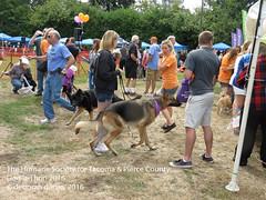 DAT2016_Crowd_1094 (greytoes_99) Tags: agility cat dat2015 dat2016 event humanesocietytacoma people summer tacoma tacomahs volunteers dog humananimalbond lakewood wa us