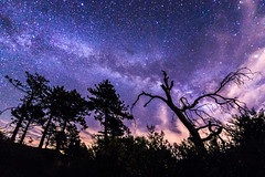 Milky Way over Noble Canyon in Mount Laguna (slworking2) Tags: julian california unitedstates us milkyway noblecanyon mountlaguna galaxy trees forest