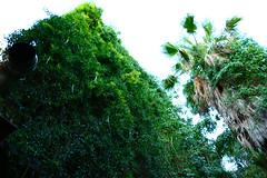 Taviano (vinci1995mij) Tags: italien italia 2016 sommer sommerferien sonnenschein stand kste beach sand strand sandstran traum italy salento salentu lu mare sule jentu lecce leccese gallipoli meeresboden meeresgrund pesculose posto vechio martinucci
