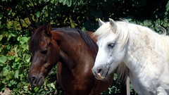 Old fellows (afilitos) Tags: greece katerini pieria horse